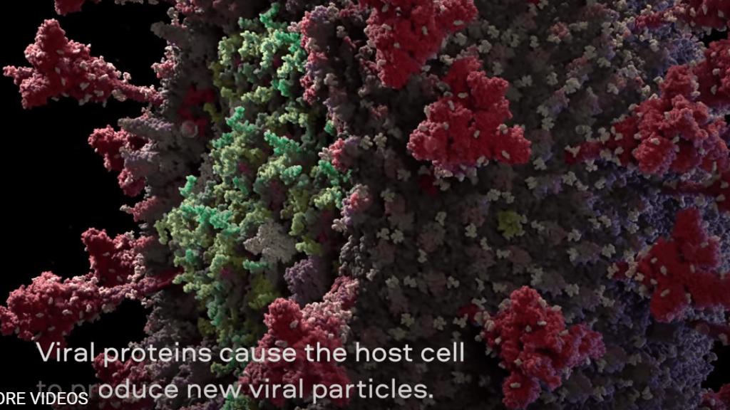 Akár korallzátony is lehetne, de valójában ez a koronavírus szerkezete.