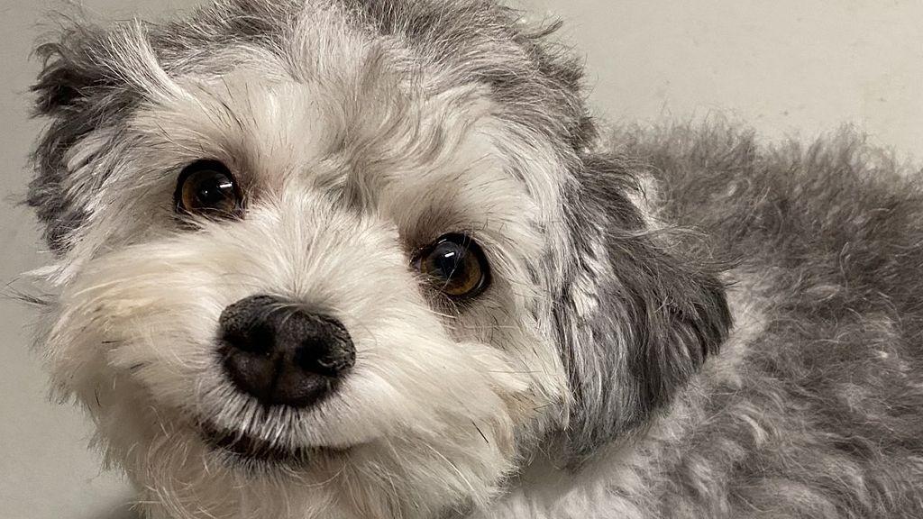 karantén, kutyakozmetika, hajvágás