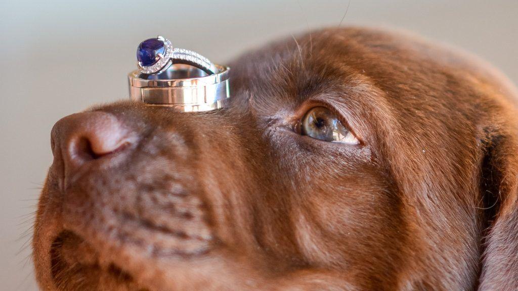 A kutyák vállalták a koszorús lányok szerepét az esküvőn.
