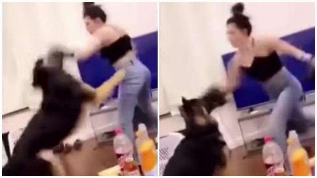 kutya verés bokszkesztyű