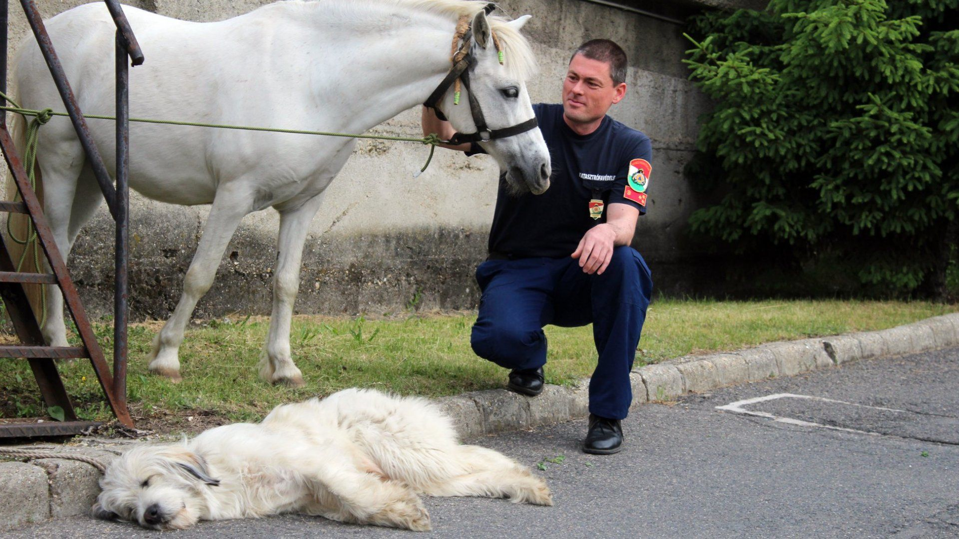 ló kutya tűzoltóság meglett gazdájuk