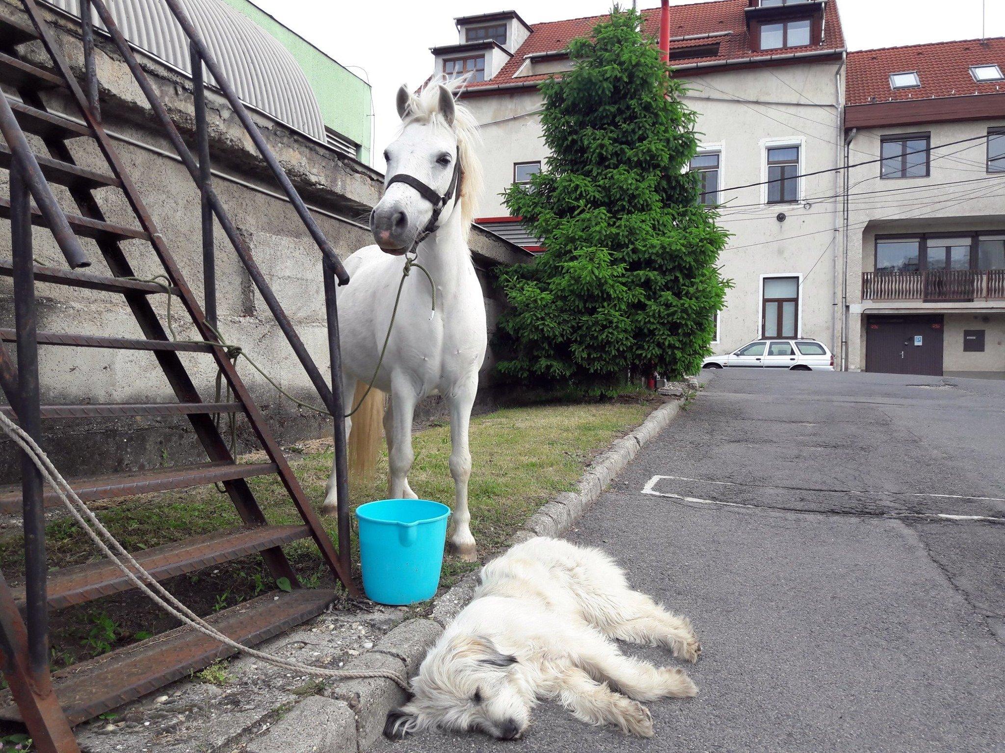ló kutya tűzoltók