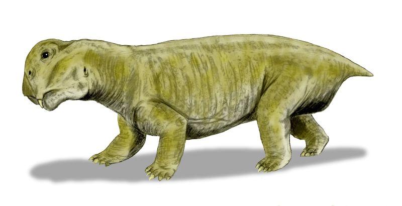 Egy elég szerencsétlen külsejű synapsida, a Lystrosaurus (forrás: Wikipedia)