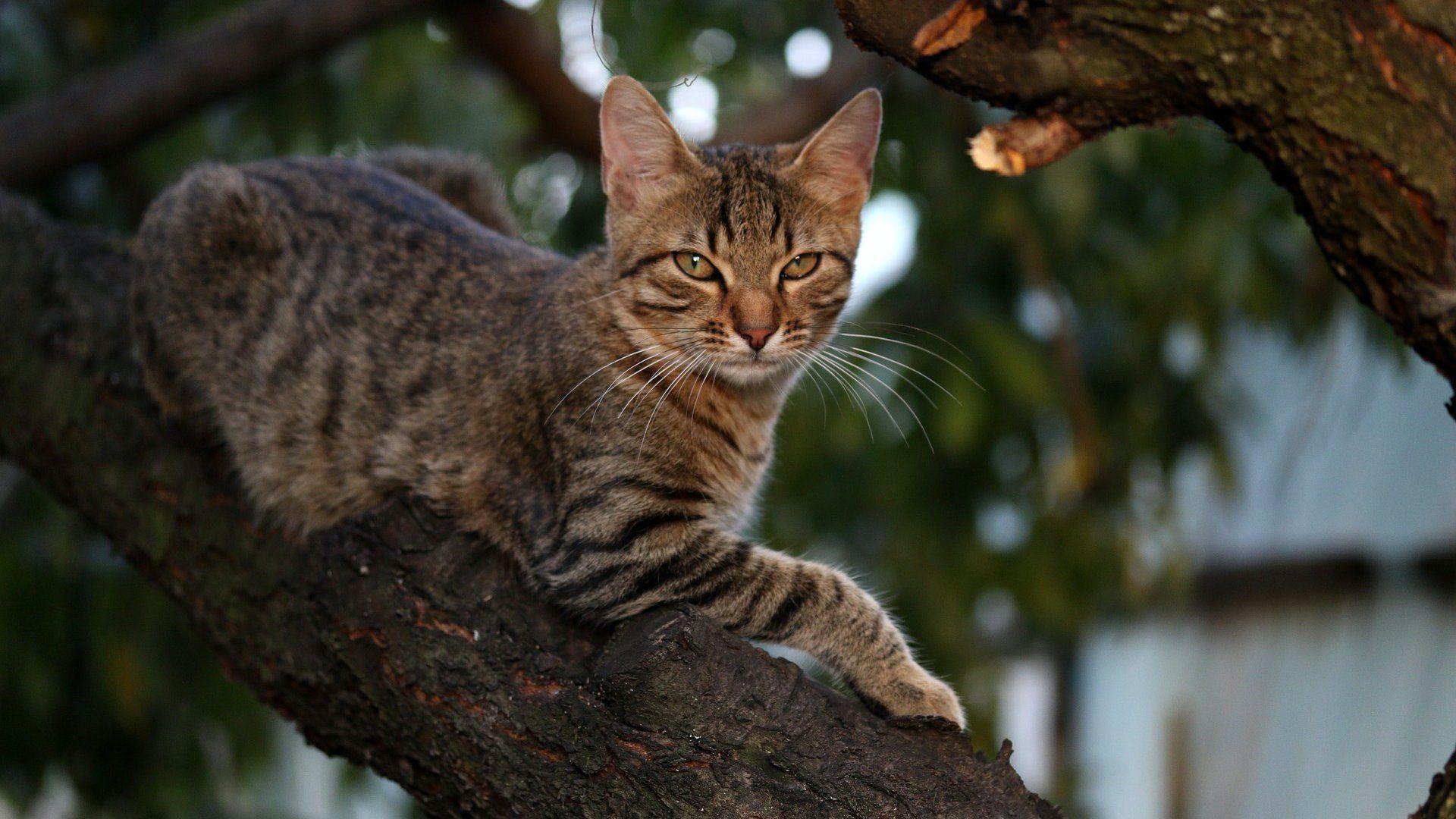macska fára mászás