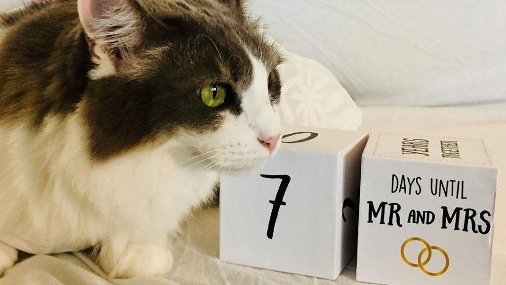 macska férfi házasság állatmenhely gyűjtés