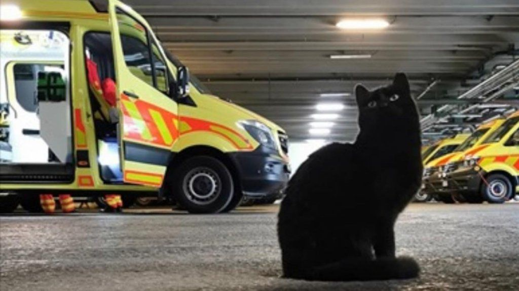 mentők fekete macska