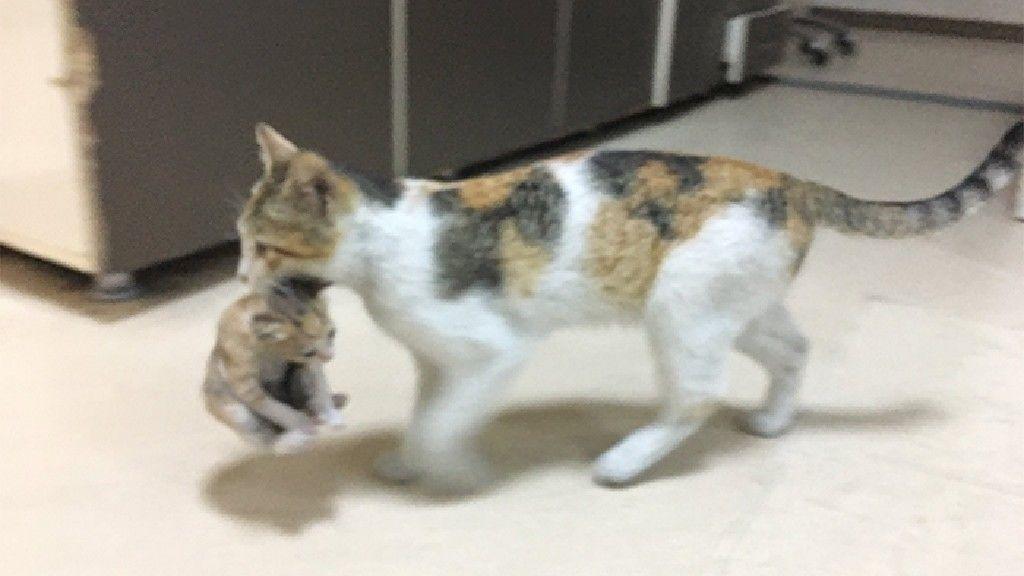 Így sétált be a kórházba a macska