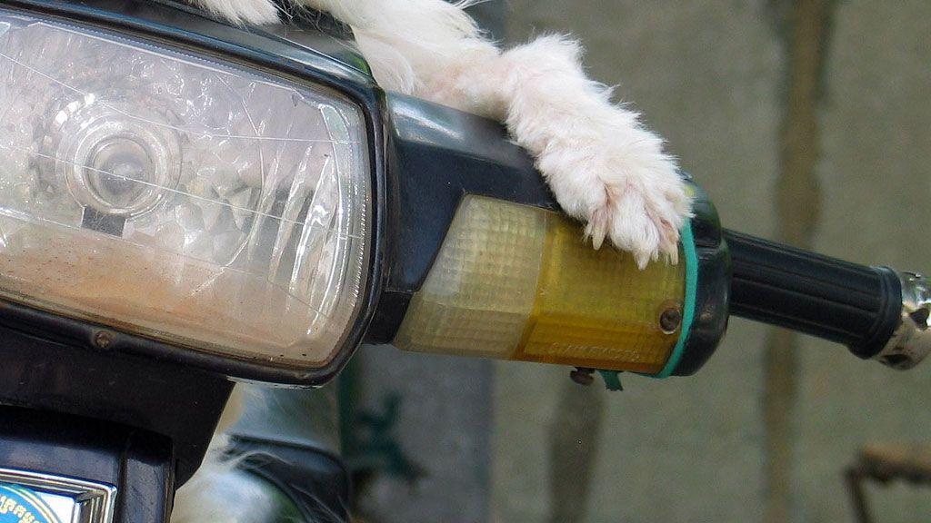 motoros kutya