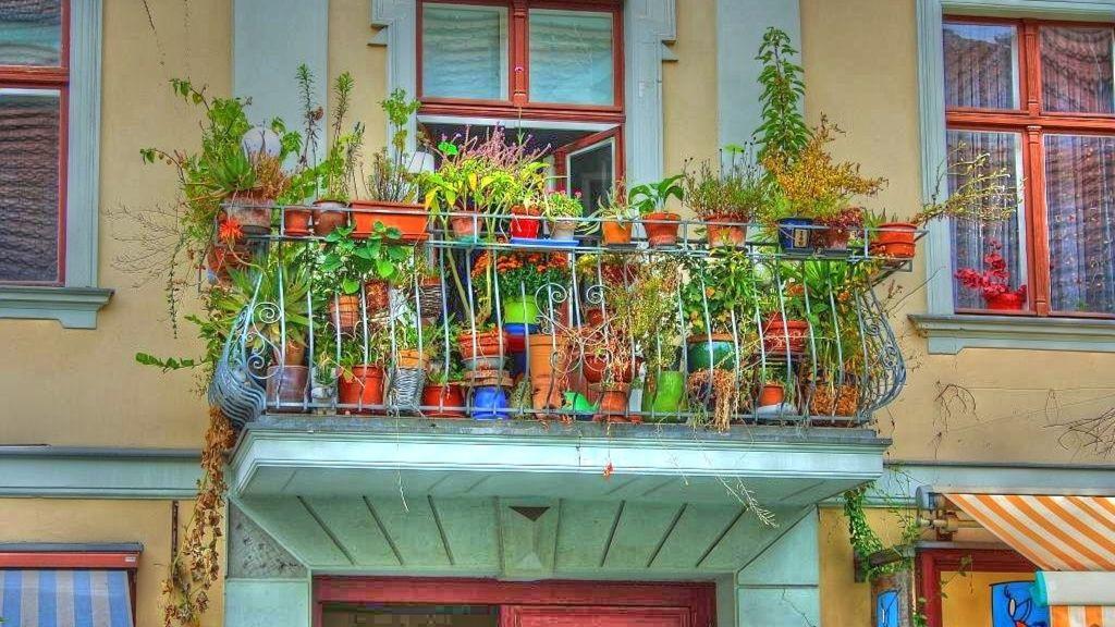 Ültesd tele a teraszt strapabíró növényekkel!