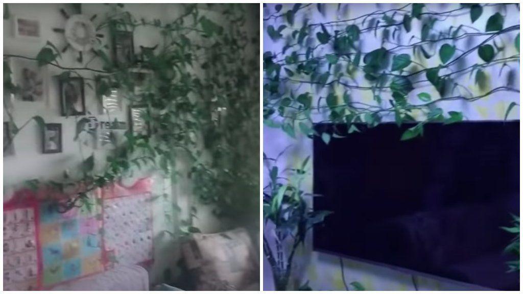 elburjánzó szobanövények