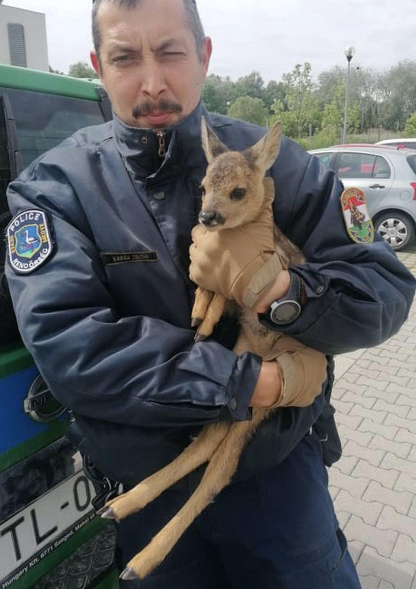 Őzgidát tartottak háziállatként egy bűnszervezet tagjai