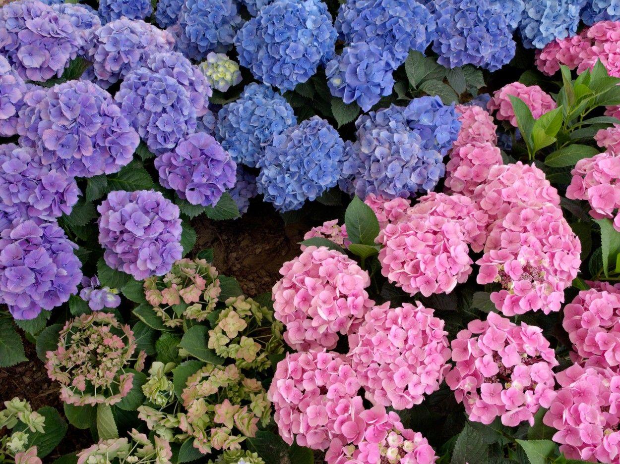 Kék vagy inkább rózsaszín legyen?