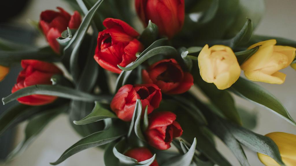 Mi lehet szebb egy csodás tavaszi tulipáncsokornál?