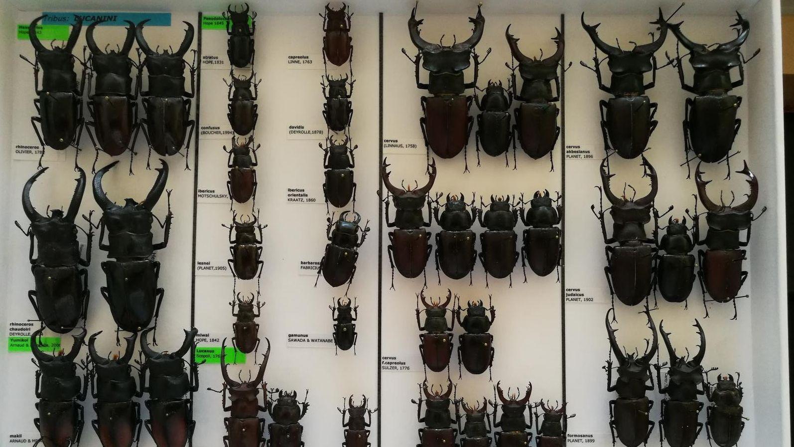 A rovargyűjtemény egy részlete