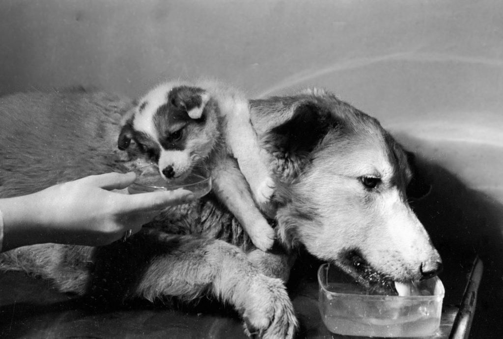 Élő kétfejű kutyák kerültek ki a szovjet laborból