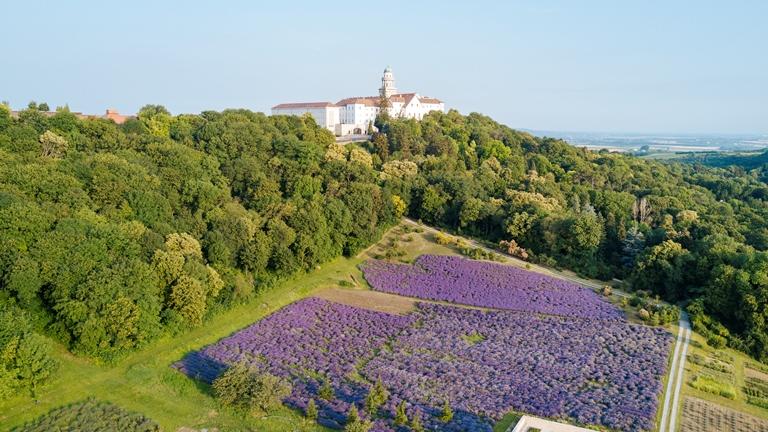 Így fest ma a pannonhalmi levendulás a Szent Márton-hegyen
