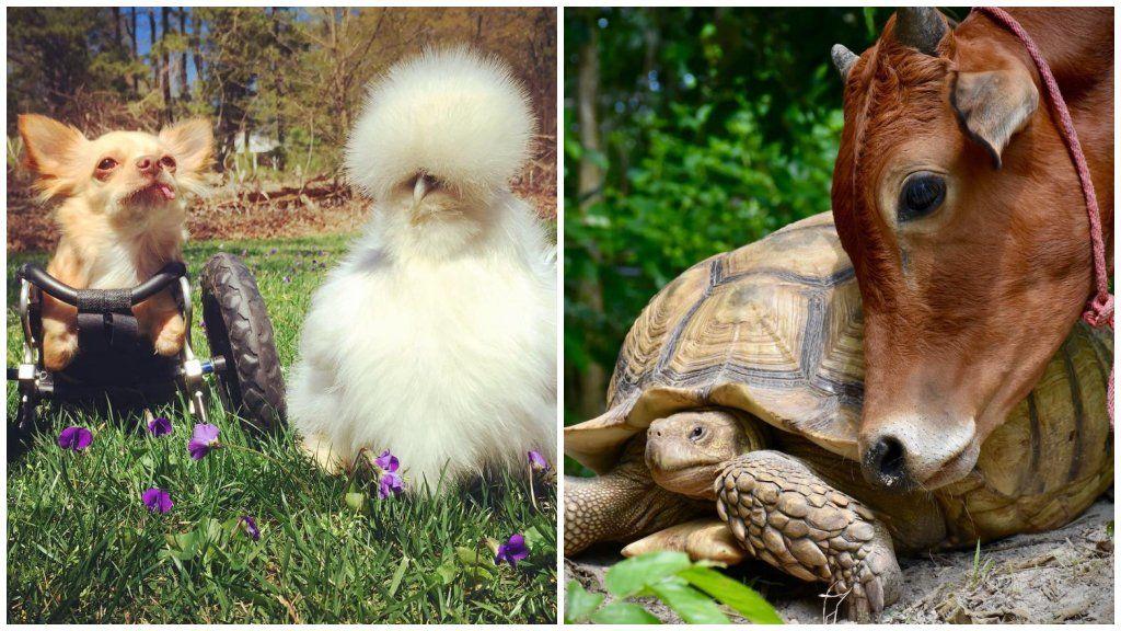 szokatlan állati barátság