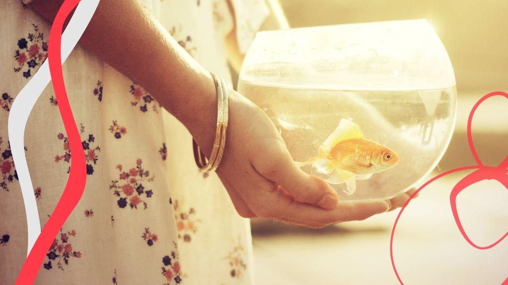 A feng shui szerint az aranyhal nagy szerencsét hoz