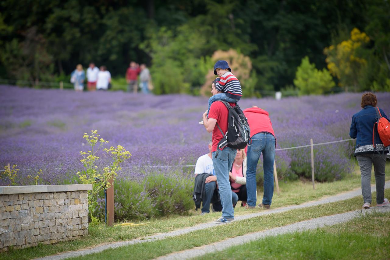 Látogatók Pannonhalmán, az apátság levendulás kertjében. Nemcsak a növényről, de a belőle nyert értékes illóolajról és a levendulás kozmetikumok készítéséről is sokat tudhatunk meg itt.