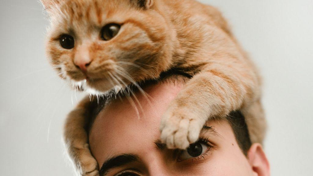 A nő macskaőrülete vezetett váláshoz.
