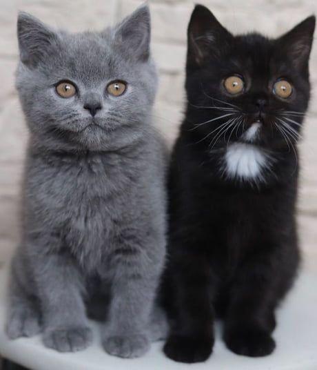 Narniának, a kétarcú macskának két cicája született