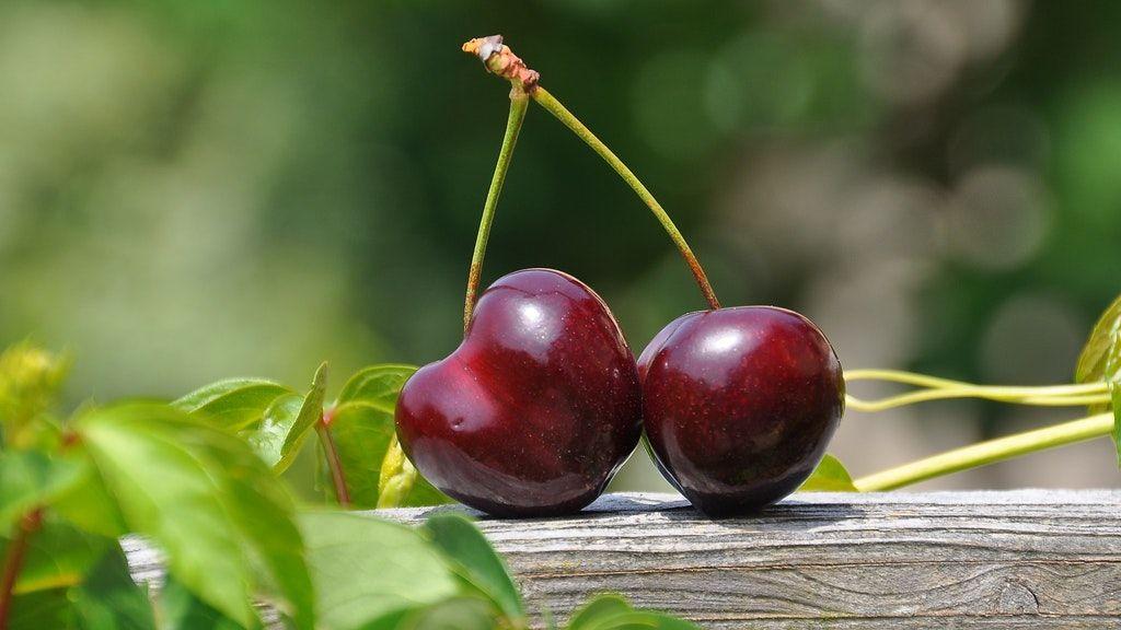 A szedd magad akcióban szedett gyümölcs a legfrissebb (Fotó: Pixabay)