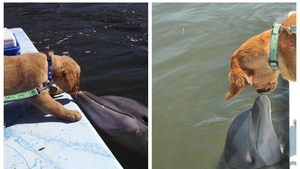 Életre szóló állatbarátság szövődött a delfin és a kutya között