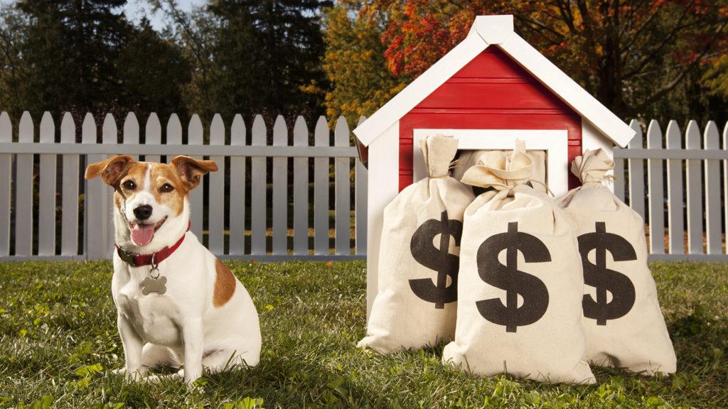 Százmillió forint készpénzt talált a kutya