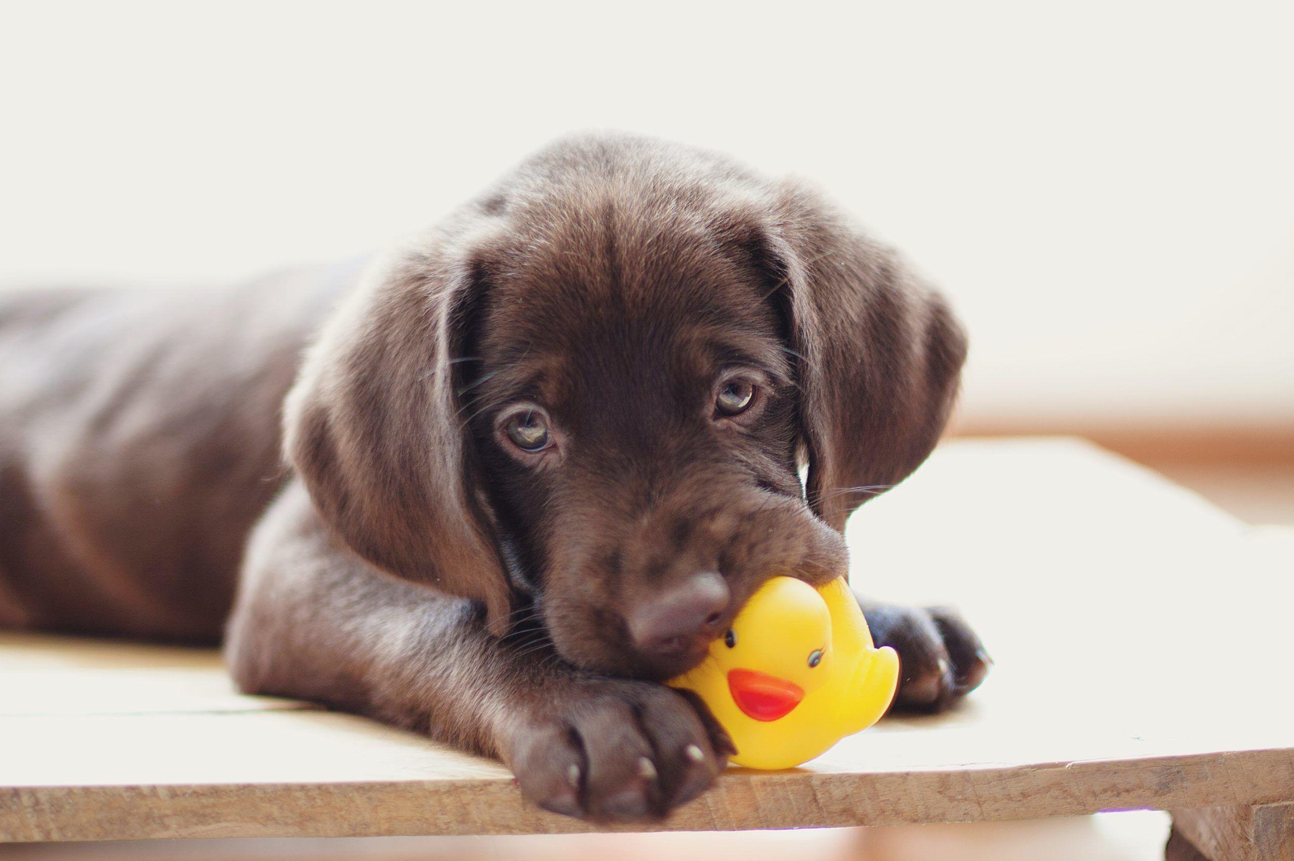 Megesett a boltos szíve a cuki kutyuson, amelyiknek elszakadt a kedvenc játéka