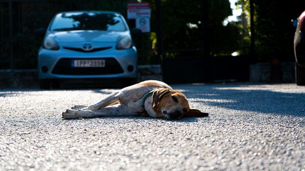 Kutya okozott balesetet, a gazdi a felelős