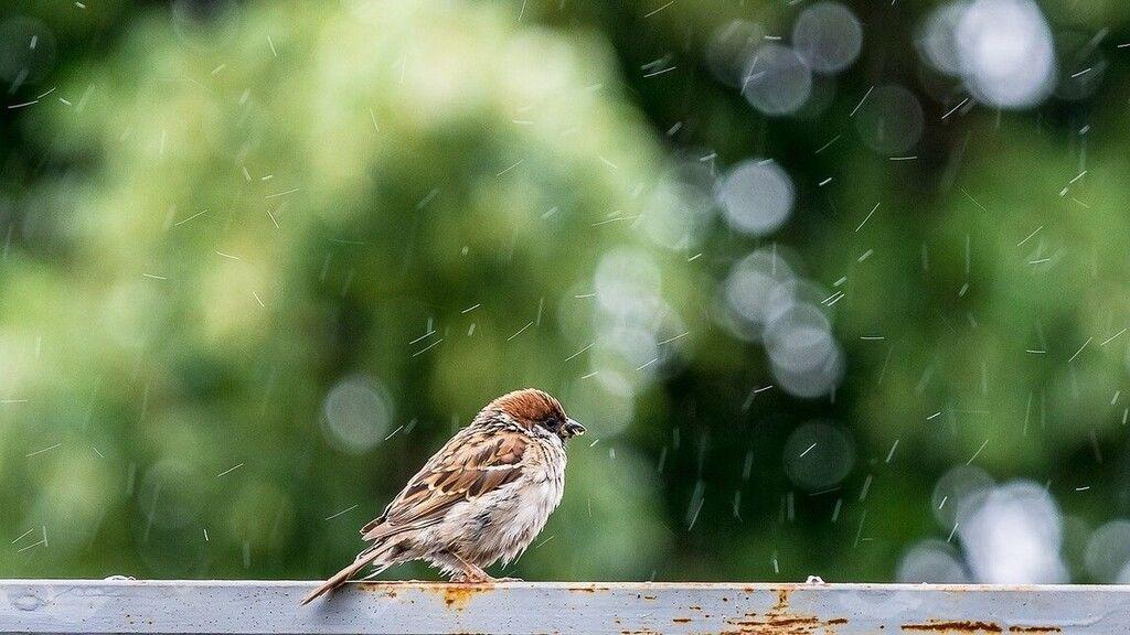 Esősnek ígérkezik a kedd, de a meleg megmarad