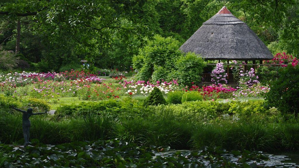 Augusztusban virágzik a lótusz a szegedi fűvészkertben
