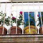 Rózsakert az erkélyen