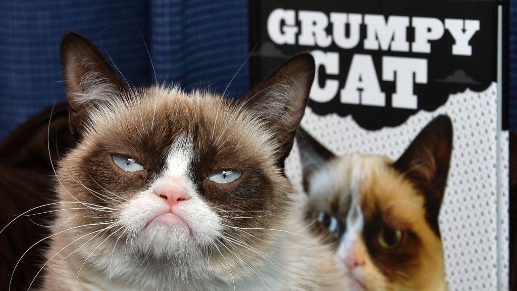 Az eredeti grumpy cat-et nem lehet túlszárnyallni. Vagy mégis?