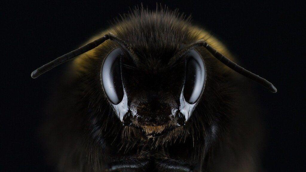 Méhek - Fotó: Pixabay