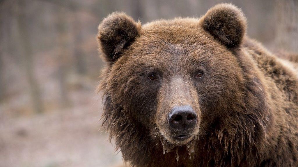 Medvét láttak Hevesmegyében