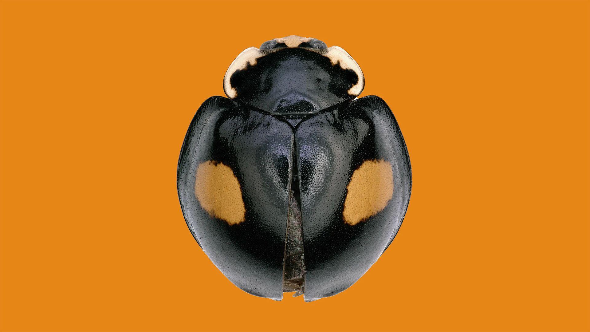 Az otthoni karanténban fedeztek fel új rovarfajokat