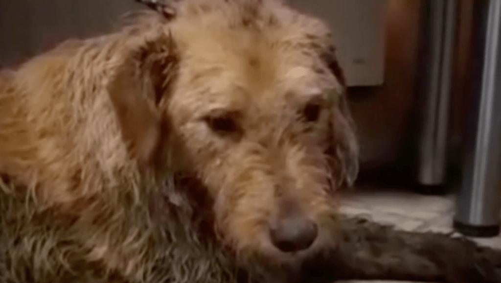 Kimentették a kutyát