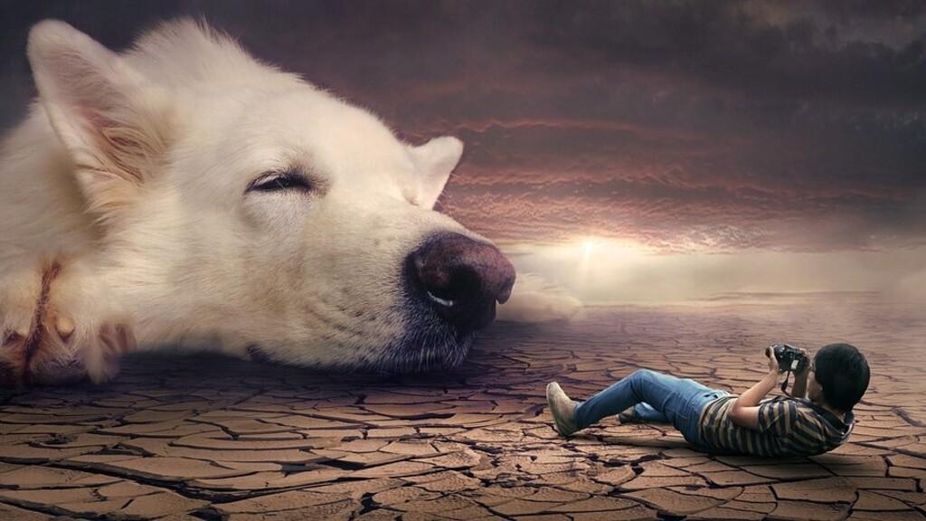 Ezt jelenti, ha kutyával álmodsz