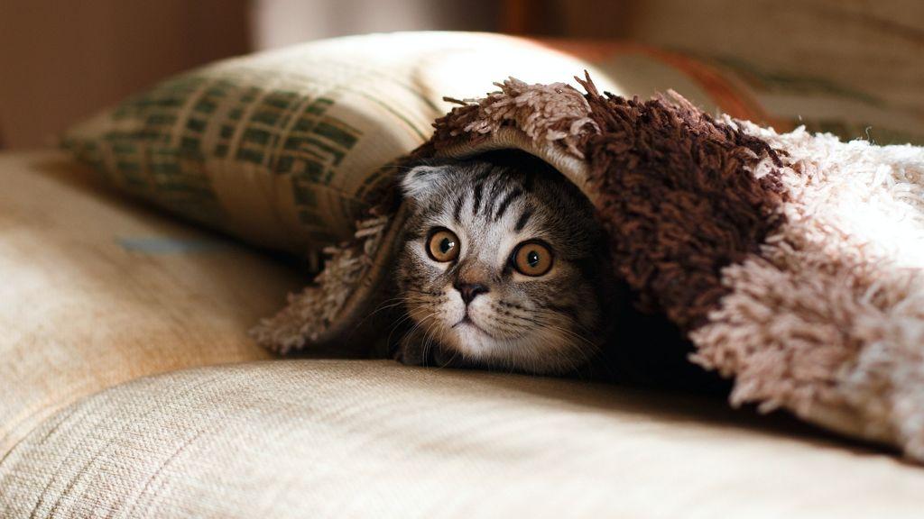 Cuki cicajátszótér a lakásban.