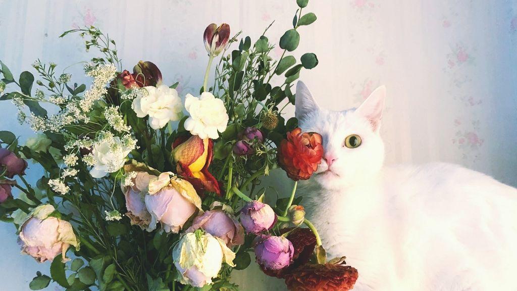 Majdnem megölte a macskát a liliom rágcsálása