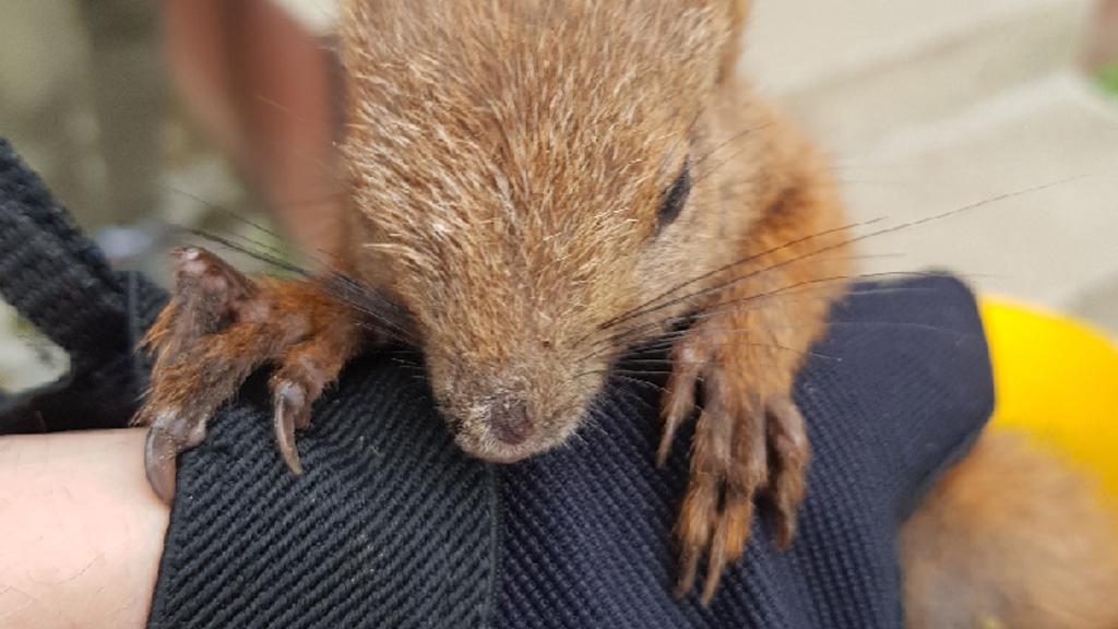 Sérült mókuson segítettek a rendőrök