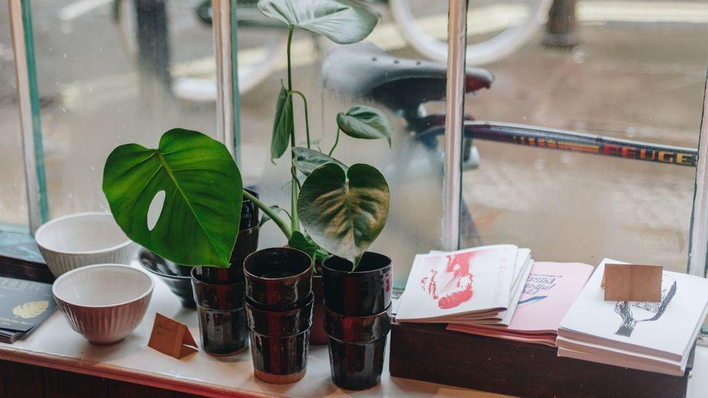 A könnyezőpálma igénytelen szobanövény