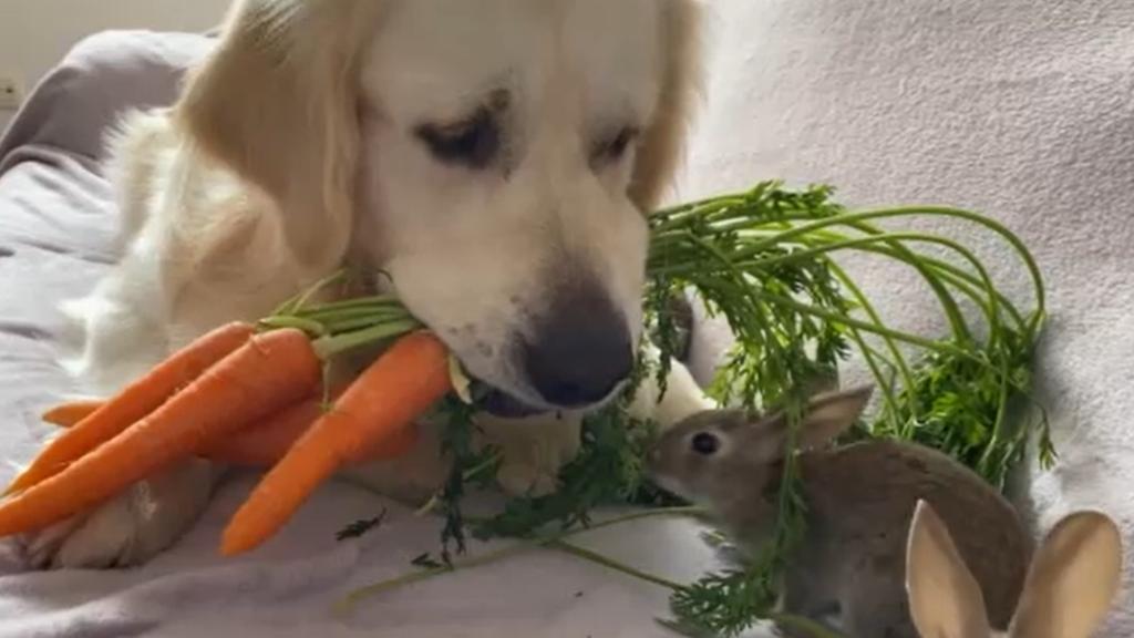 Egy újabb állati szokatlan barátság.