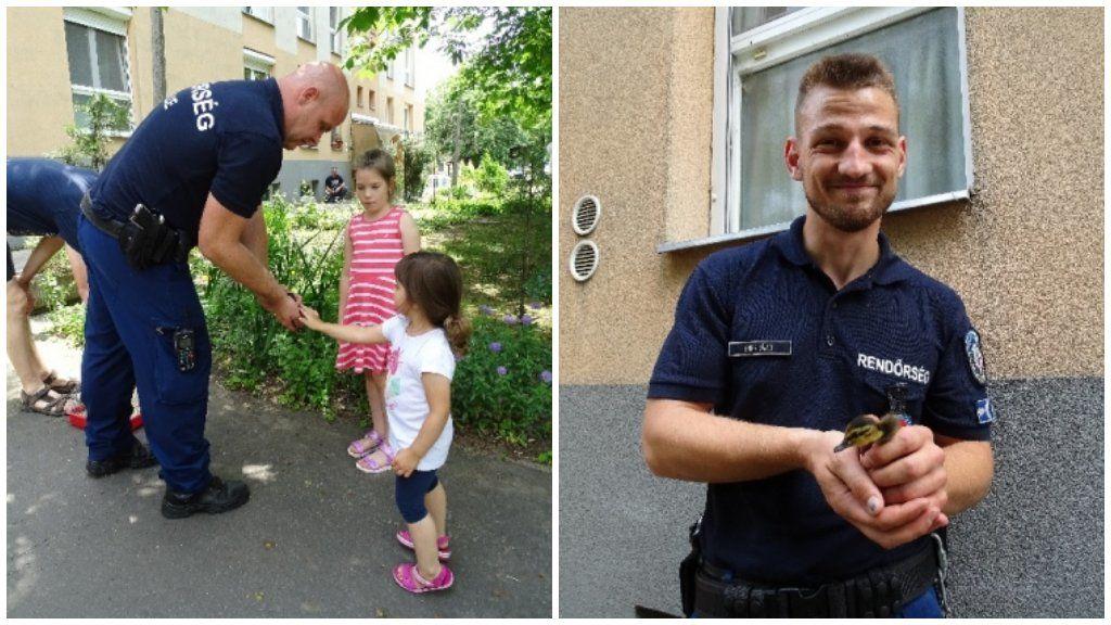 kiskacsák mentés rendőrök