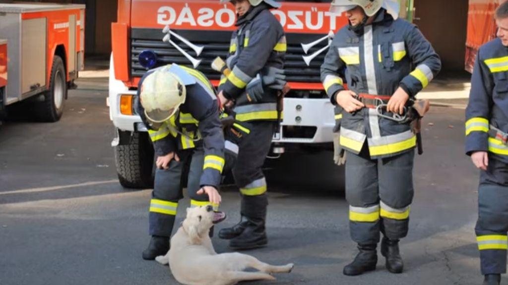 Nyugdíjba megy Brúnó, a tűzoltókutya