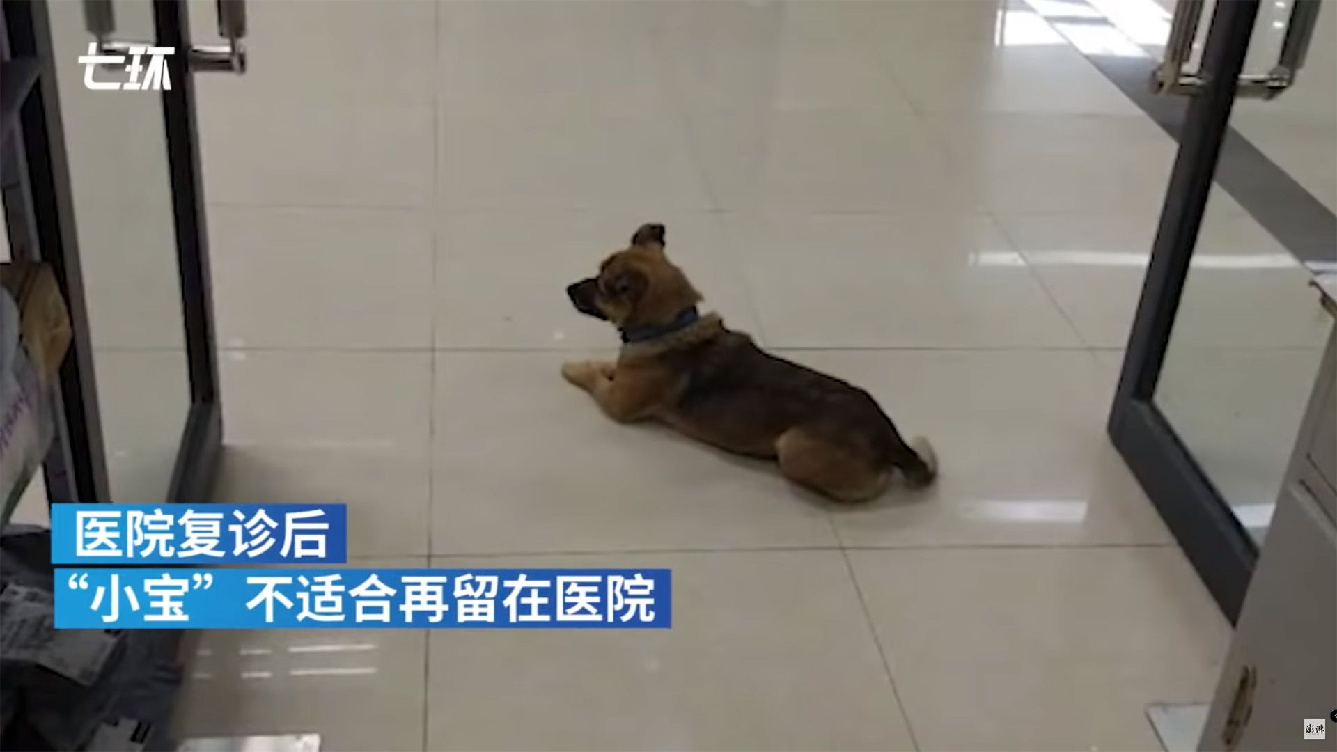 Gazdájára váró kutya egy vuháni kórházban