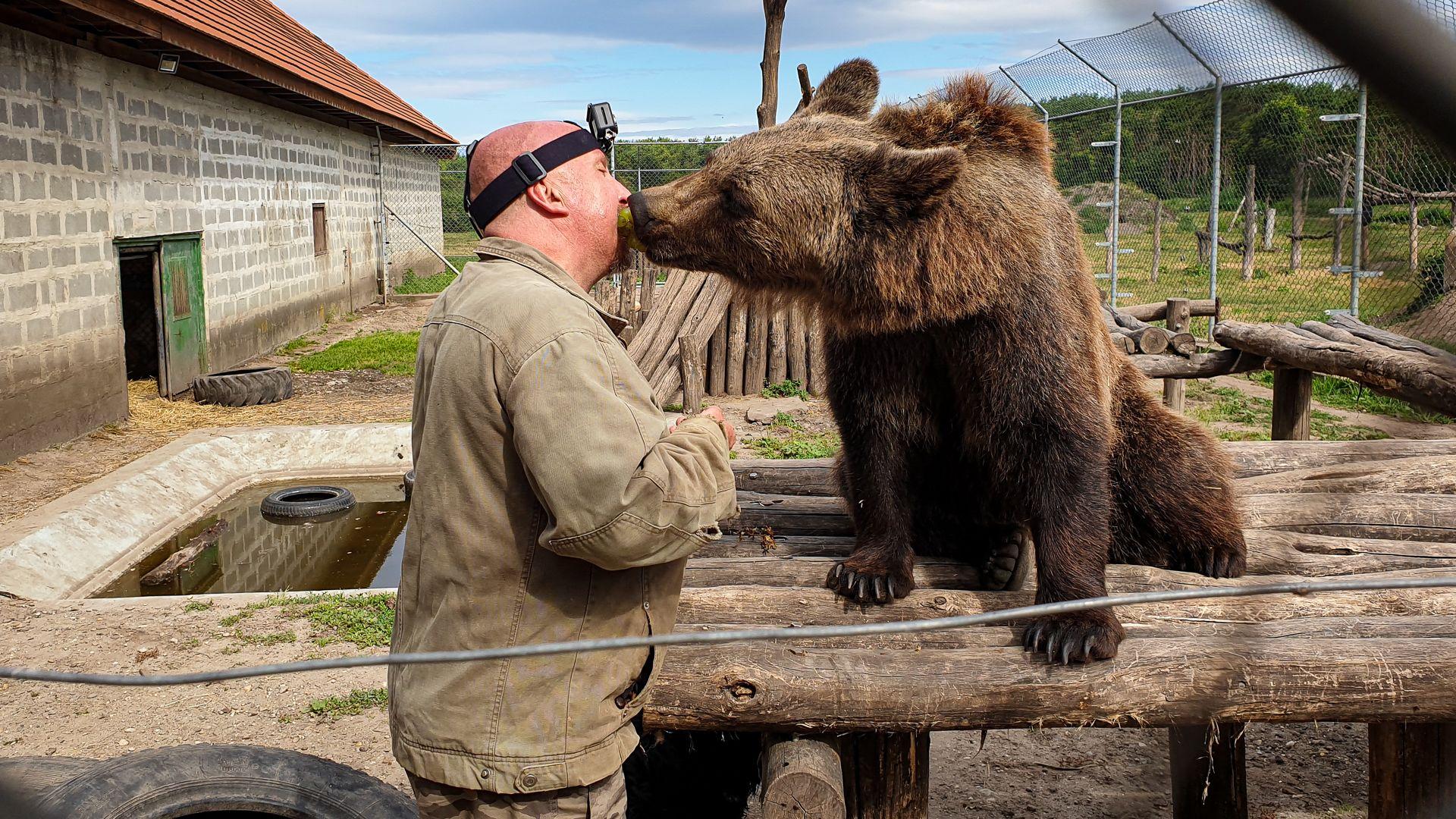 Medvebocsot nevel István a veresegyházi medveotthonban