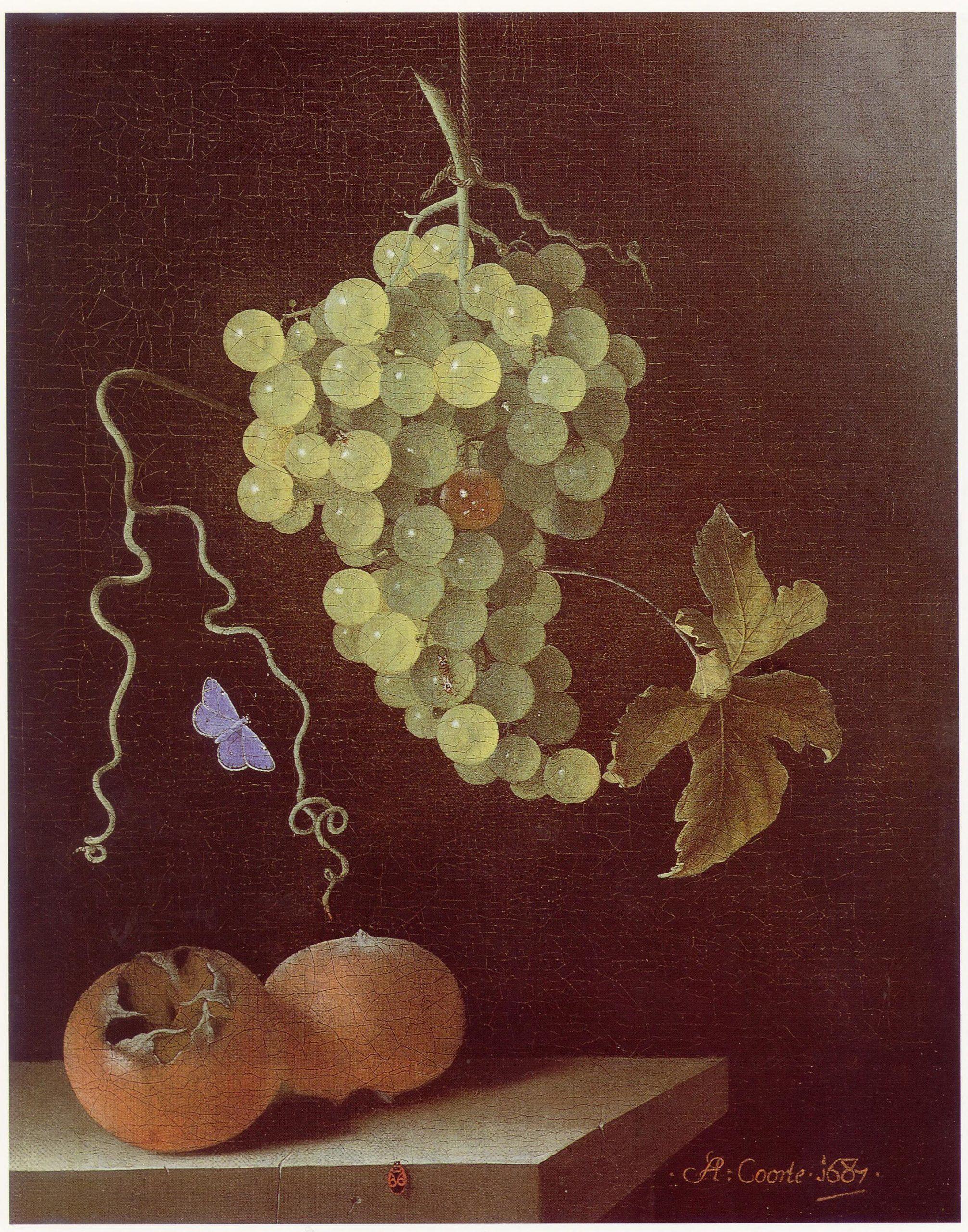 Adriaen Coorte festménye 1687-ből (forrás: Wikipedia)