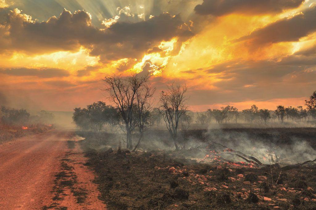 Állat-, és növényfajok tűnhettek el az ausztrál bozóttűzben